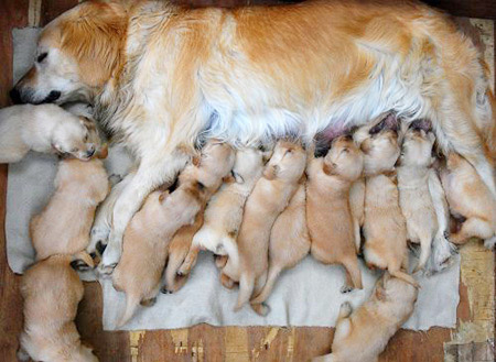 new mommy with pupps